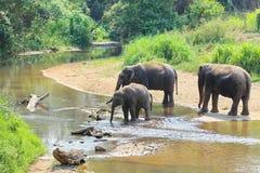 Elefante che spruzza con acqua Immagine Stock Libera da Diritti