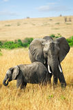 Elefante com bebê foto de stock royalty free