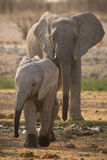 Elefante com bebê Fotografia de Stock Royalty Free