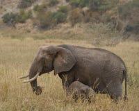 Elefante com filhote Foto de Stock