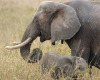 Elefante com filhote Imagem de Stock Royalty Free