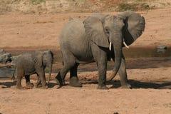 Elefante com o bebê no furo de água Fotos de Stock Royalty Free