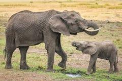 Elefante com um filhote Imagem de Stock