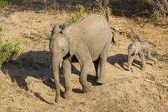 Elefante con el bebé, Suráfrica Fotos de archivo