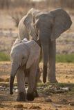 Elefante con el bebé Fotografía de archivo libre de regalías