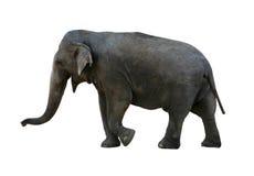 Elefante con el camino de recortes Imagen de archivo libre de regalías