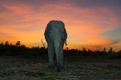 Elefante con el cielo multicolor imagenes de archivo