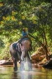 Elefante con el hombre en el río foto de archivo
