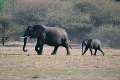 Elefante con il bambino fotografie stock