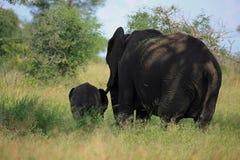 Elefante con il suo bambino Immagine Stock