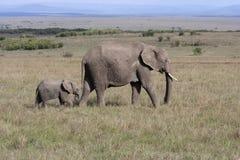 Elefante con l'elefante del bambino che cammina sulla savana africana in Amboseli immagine stock