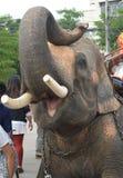 Elefante con la boca abierta Imagen de archivo