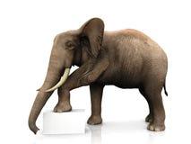 Elefante con la muestra Imagenes de archivo