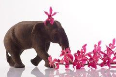 Elefante con la orquídea Fotografía de archivo