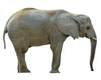 Elefante con los caminos foto de archivo