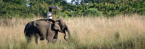 Elefante con Mahout Fotos de archivo libres de regalías