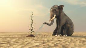 Elefante con un gambo di una pianta di fagioli Fotografie Stock Libere da Diritti