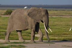 Elefante con un pájaro Imagen de archivo