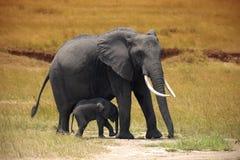 Elefante con un piccolo bambino in Amboseli fotografia stock libera da diritti