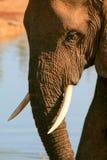 Elefante contro arancio e blu Fotografie Stock