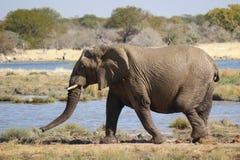 Elefante coperto di fango Parco nazionale Namibia di Etosha Fotografia Stock Libera da Diritti