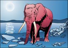 Elefante cor-de-rosa Foto de Stock