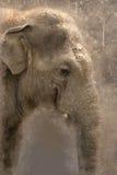 Elefante da aquarela Imagens de Stock Royalty Free