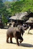 Elefante da equitação fotografia de stock royalty free