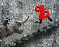 Elefante da equitação do homem de negócios que corre após o sinal de porcentagem Fotografia de Stock Royalty Free