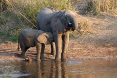Elefante da mãe com bebê Foto de Stock Royalty Free