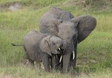 Elefante da mãe e do bebê no Masai Mara Game Reserve, Kenya fotos de stock