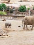 Elefante da mamãe com bebê fotos de stock
