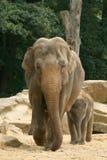 Elefante da matriz com criança foto de stock royalty free