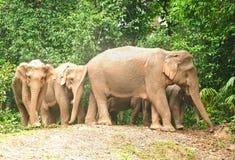 Elefante da matriz e do bebê imagem de stock royalty free