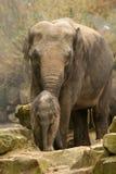 Elefante da matriz e do bebê imagens de stock royalty free