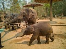 Elefante de alimentação dos povos fotografia de stock royalty free