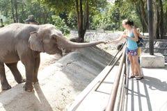Elefante de alimentación de la mujer Imagen de archivo libre de regalías