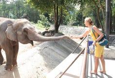 Elefante de alimentación de la mujer Foto de archivo libre de regalías