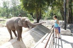 Elefante de alimentación de la mujer Imagen de archivo