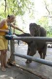 Elefante de alimentación de la mujer Imágenes de archivo libres de regalías