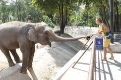 Elefante de alimentación de la mujer Fotos de archivo libres de regalías