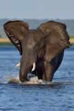 Elefante de carga Foto de archivo