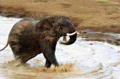 Elefante de carga imagen de archivo