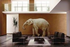 Elefante de interior