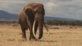 Elefante de Kenya vídeos de arquivo