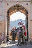 Elefante de la India con paintting colorido con el mahout en el top en Amber Palace, Rajasthán, la India Fotos de archivo
