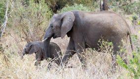 Elefante de la madre con el elefante del bebé Imagen de archivo