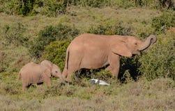 Elefante de la madre y del bebé Fotos de archivo libres de regalías