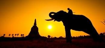 Elefante de las siluetas y escena de la puesta del sol del wiith de la pagoda Fotos de archivo libres de regalías