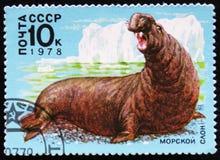 elefante de mar, cerca de 1978 Imagem de Stock Royalty Free